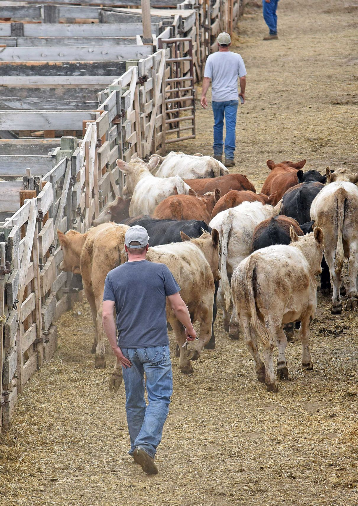 Drought causing ranchers to sell cattle