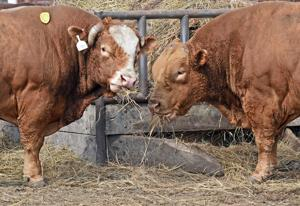 Stockmen take stand on 'lab-grown' meat labeling