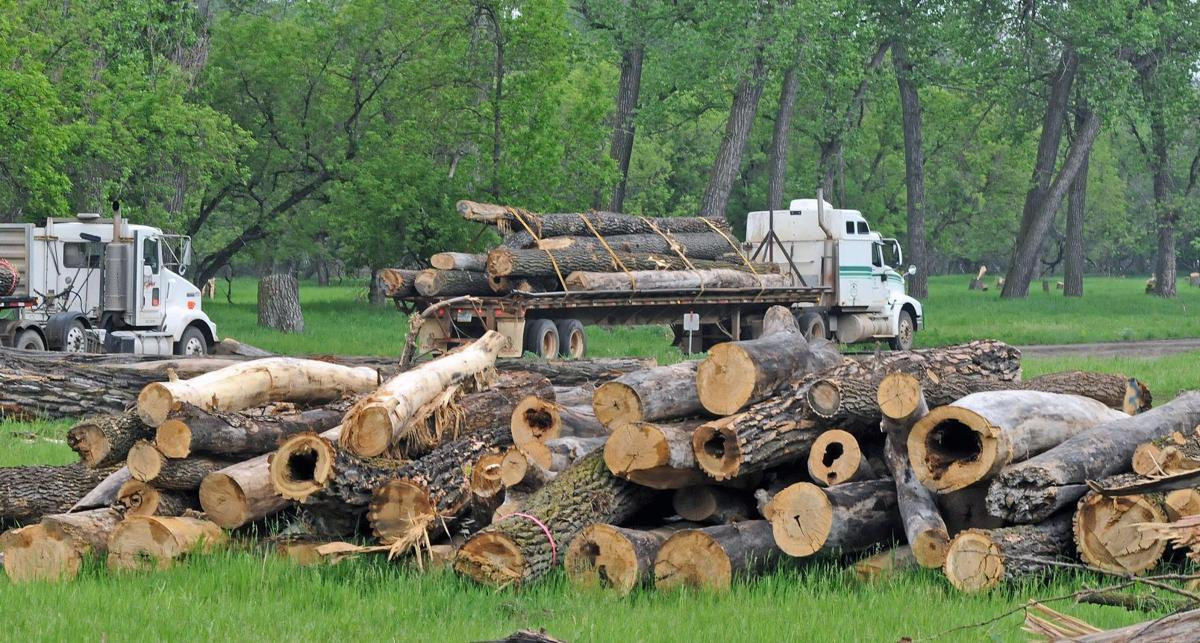 Logs transported