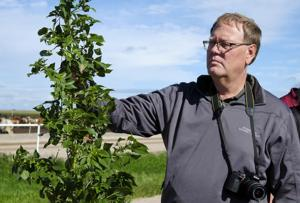 Agriculturalists work to control spread of Palmer Amaranth
