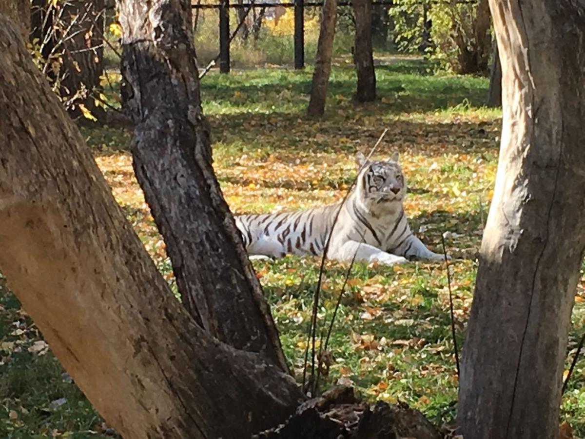 Autumn at the Dakota Zoo