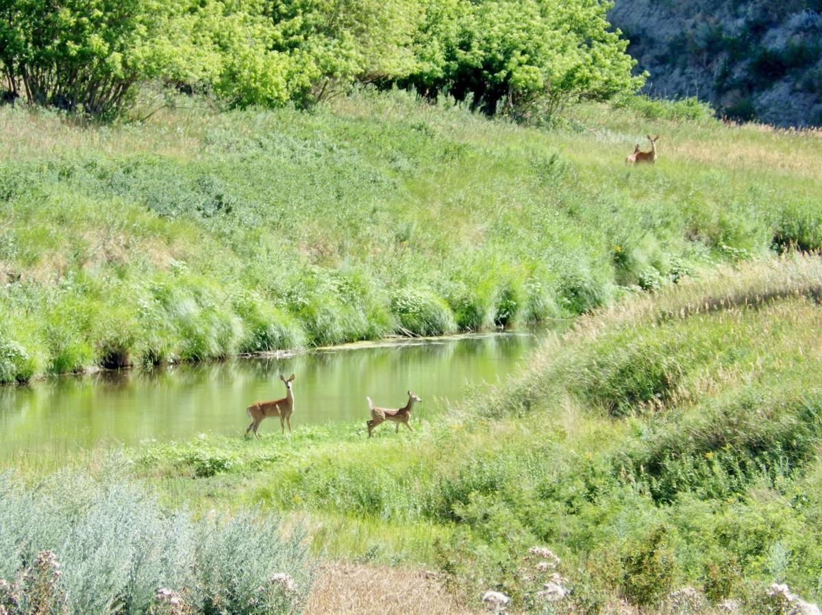 deer-opener