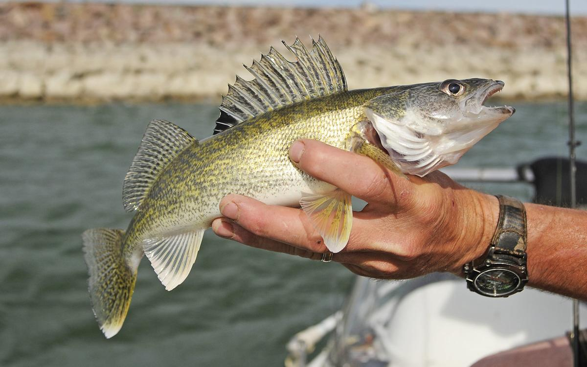 Catch-and-release fish