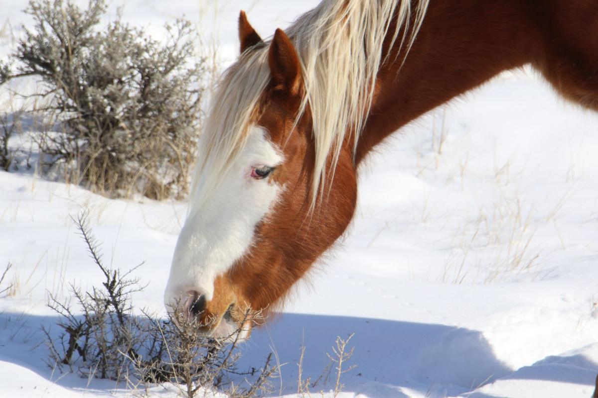 Wild Horse Munching