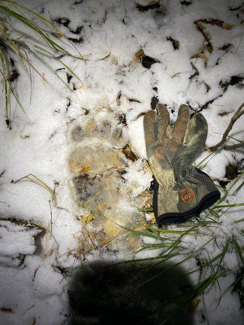 Dash Rodman grizzly track