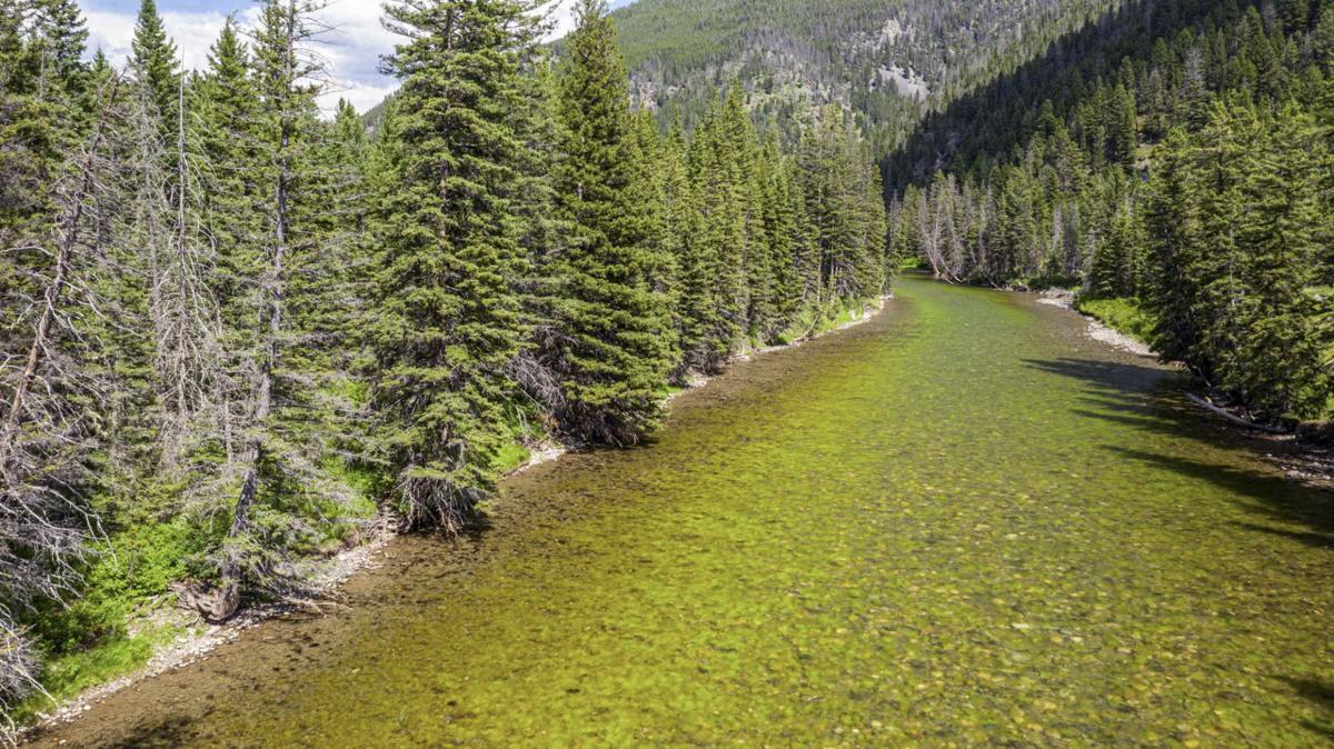 Algae Bloom, Gallatin River