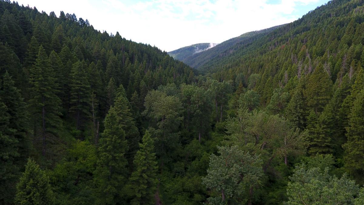 Sourdough Trail / Forest