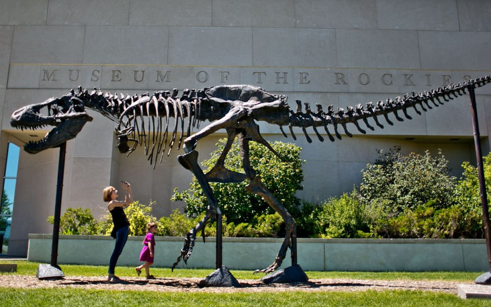 T-Rex Fossils Moving to Smithsonian
