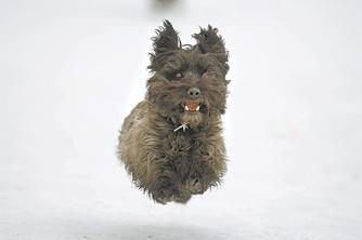 Survey: Dog owners disregard leash-laws