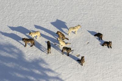 Exchange Wolf Management