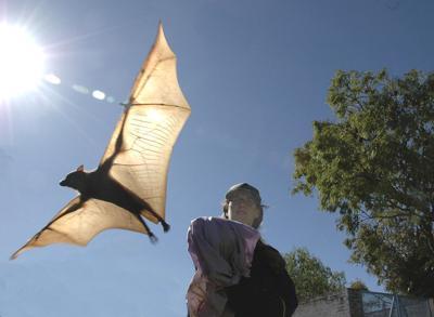 MSU project to prevent bat-borne diseases wins $10 million grant