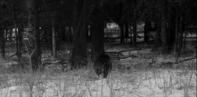 Wolverine screenshot.