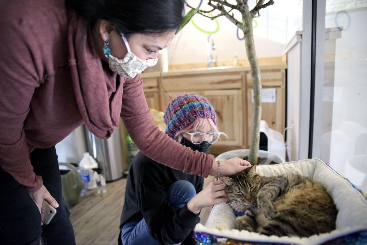 Weinstein's petting Gabby