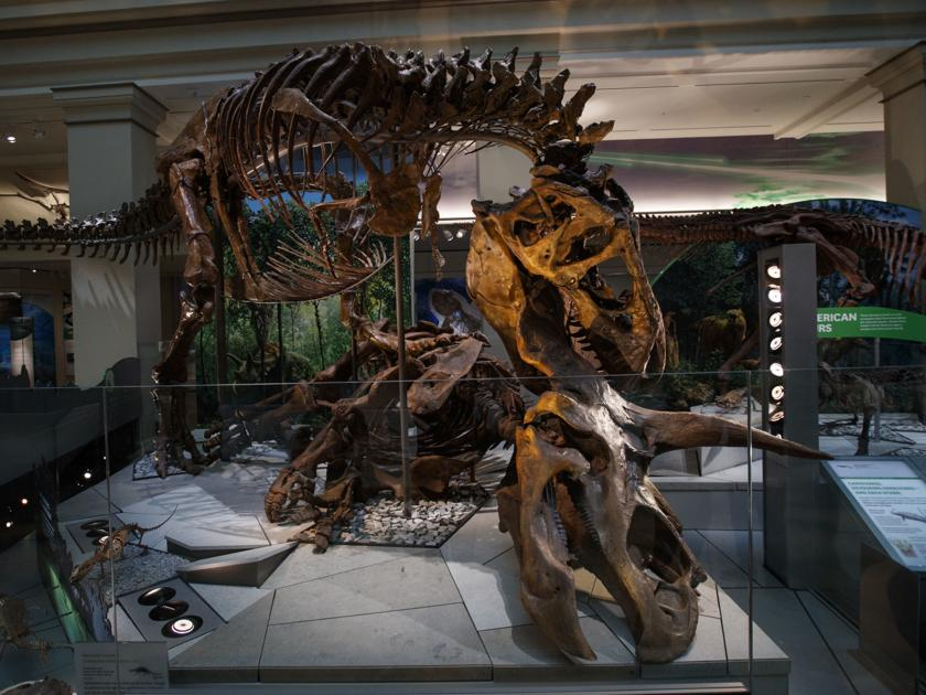 Museum of the Rockies to celebrate unveiling of 'Nation's T. rex' in D.C.
