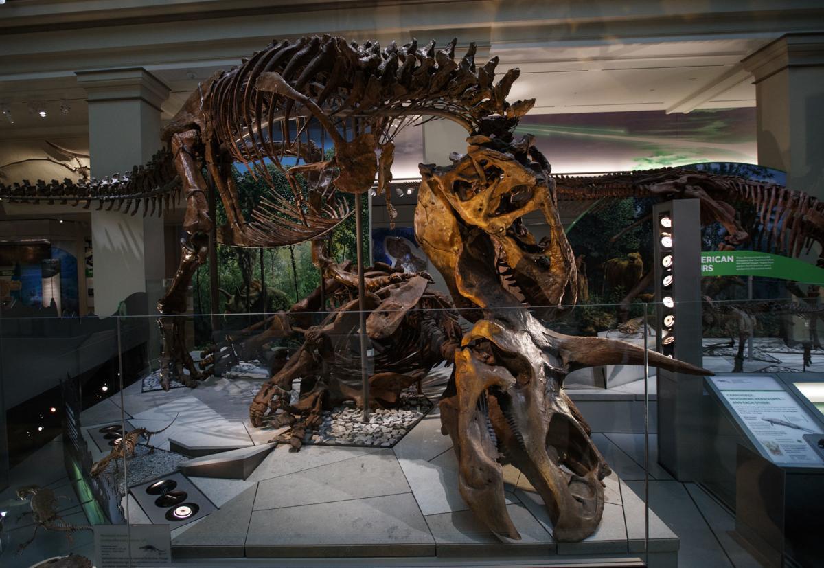 Smithsonian Tyrannosaurus
