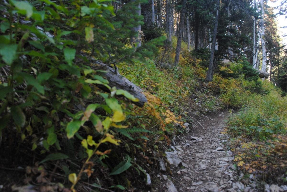 Bridger Ridge Trail