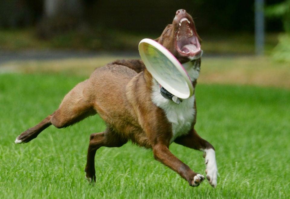 Erstkontakt mit Hunden – Tipps für ein korrektes Kennenlernen › fello