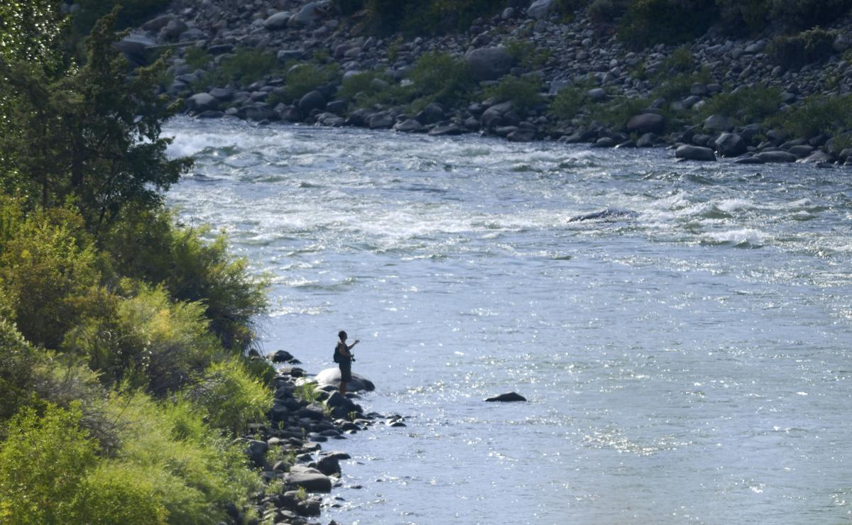 Dead fish found in yellowstone river environment for Yellowstone river fishing