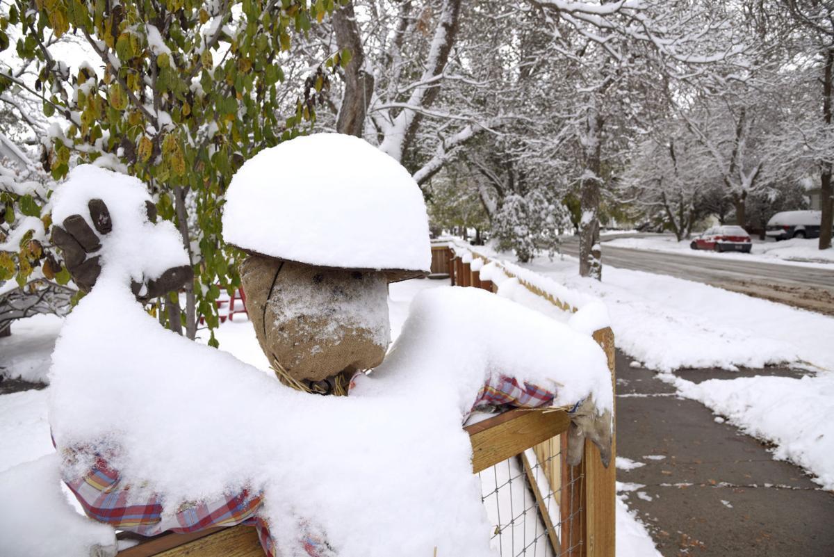 Winter Wild
