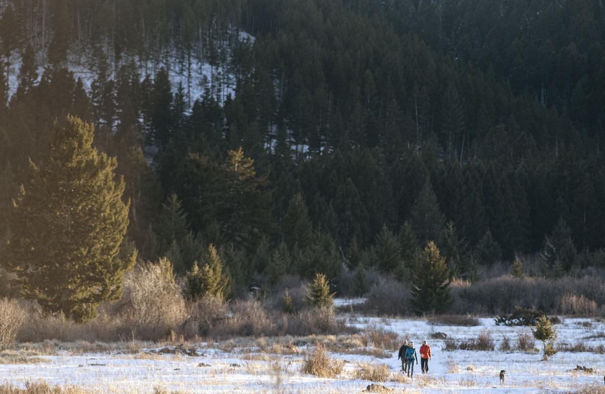 Montana Forest Action Plan