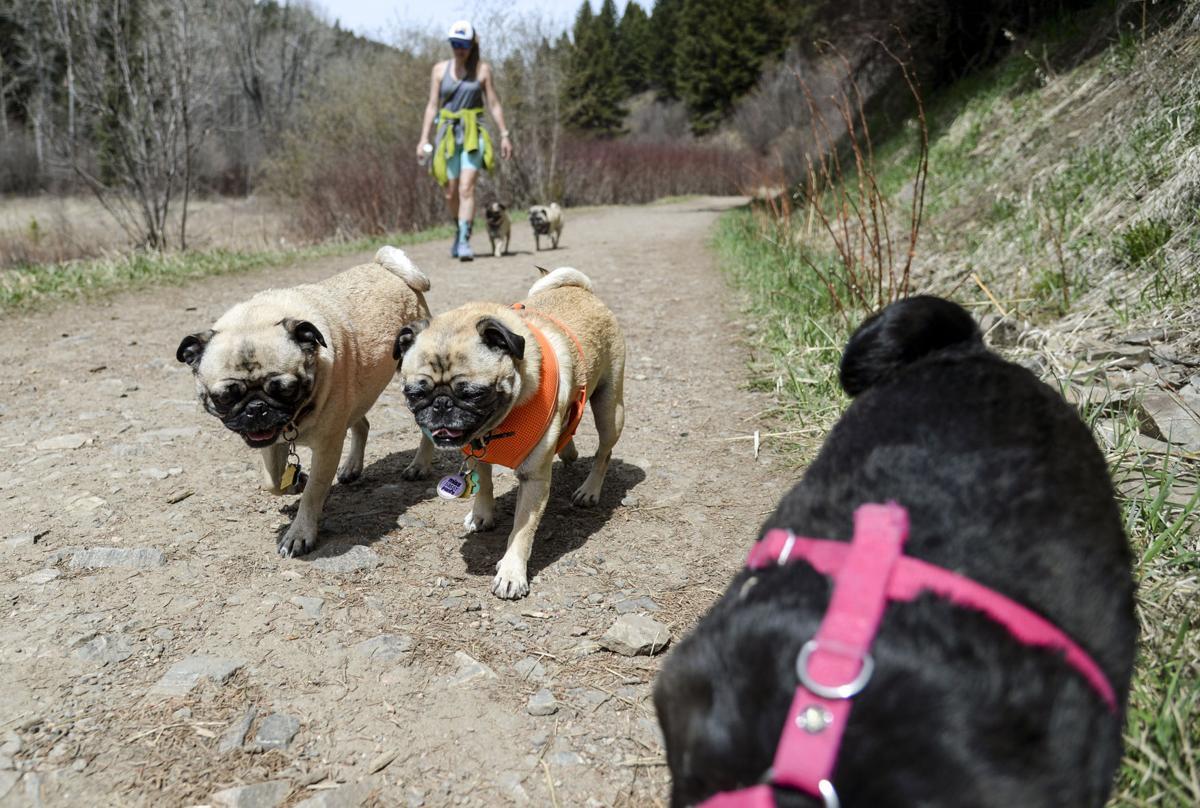 Sourdough Trail, Bozeman Municipal Watershed Project