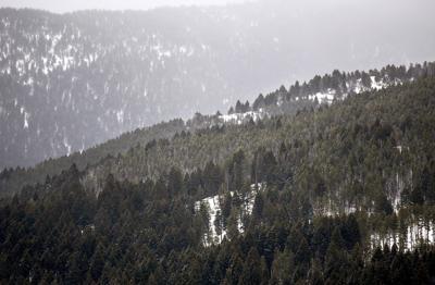 Limestone West Logging Project // Triple Tree