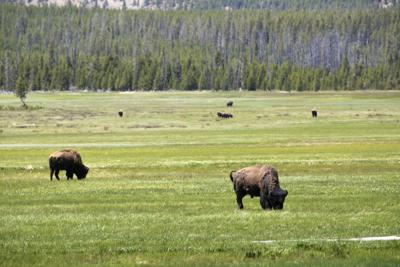 Yellowstone Entrances Reopen