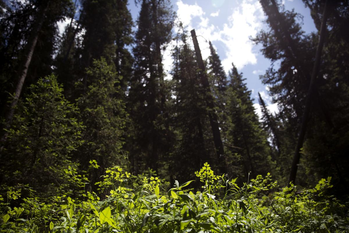 Forest Service- Forest Plan- Hyalite