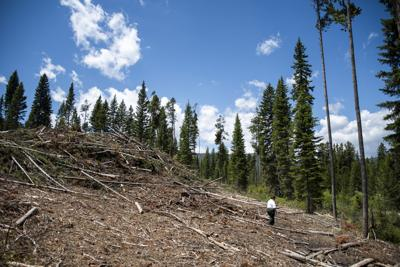 Yellowstone-logging-8.jpg