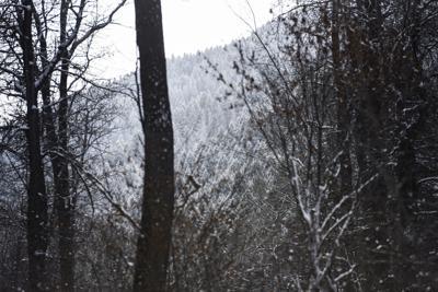 Bozeman Municipal Watershed Logging Project