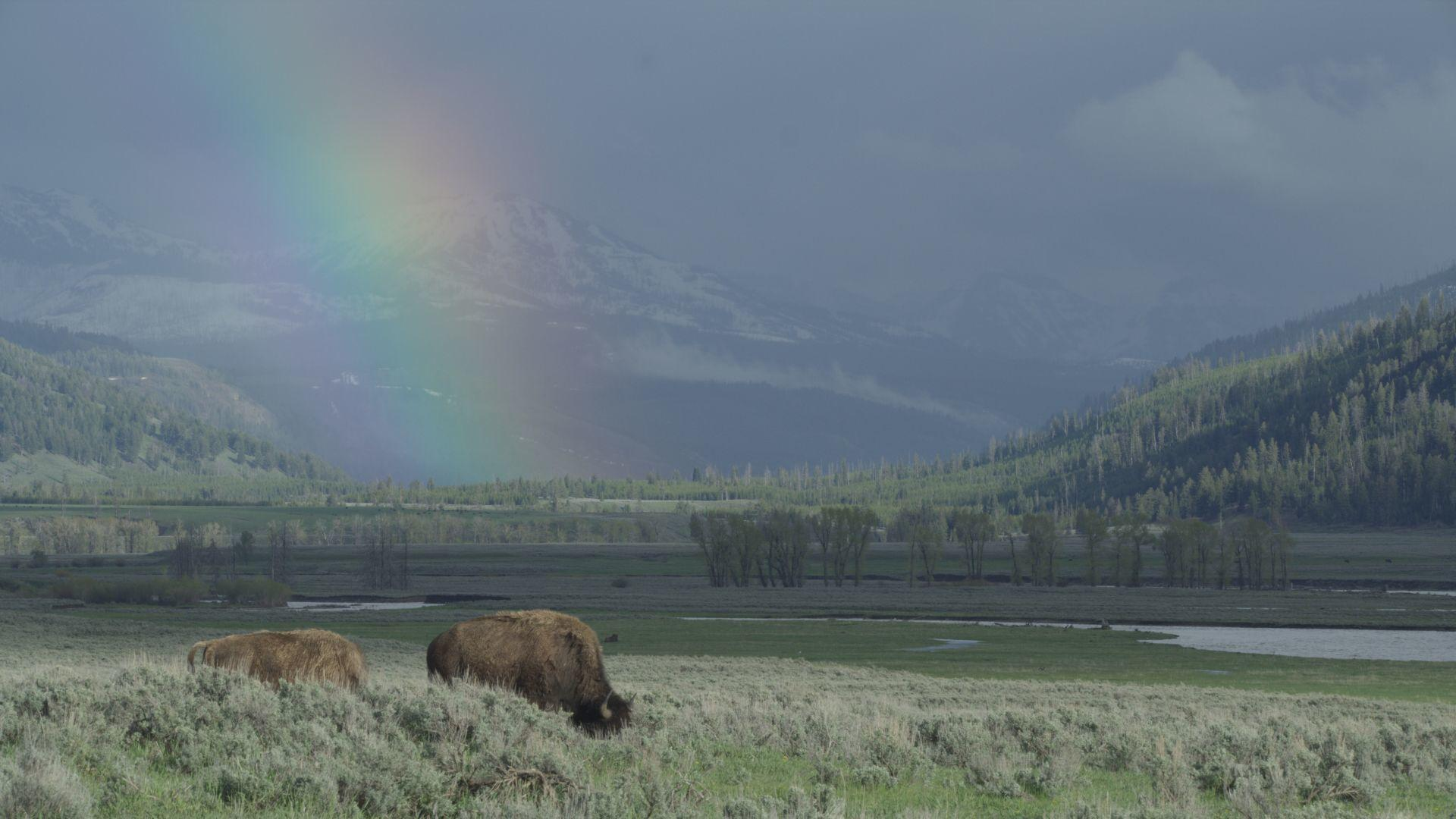 A new view of the park in 'Epic Yellowstone'   Film    bozemandailychronicle.com