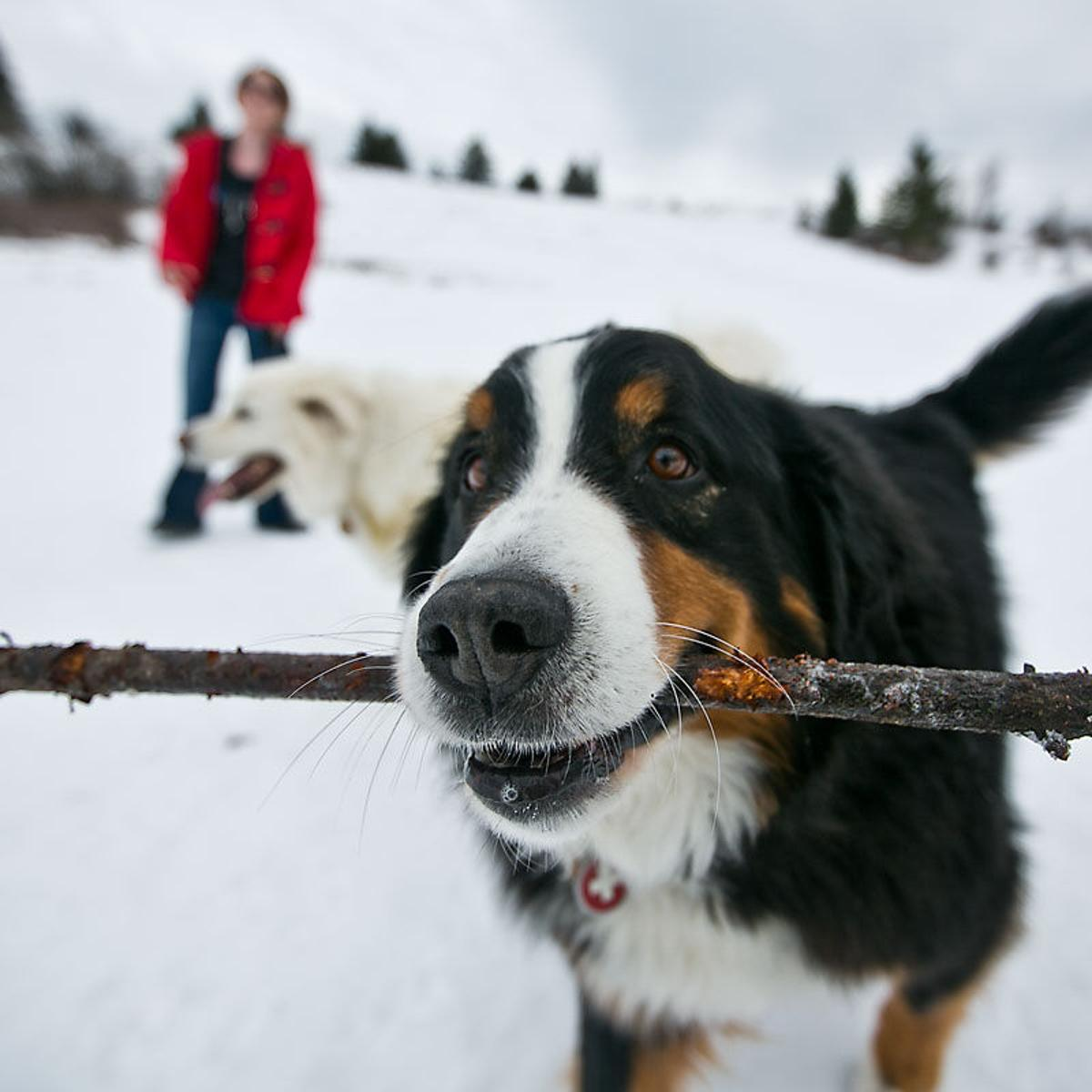 List Of Popular Bozeman Dog Names May Have You Rethinking