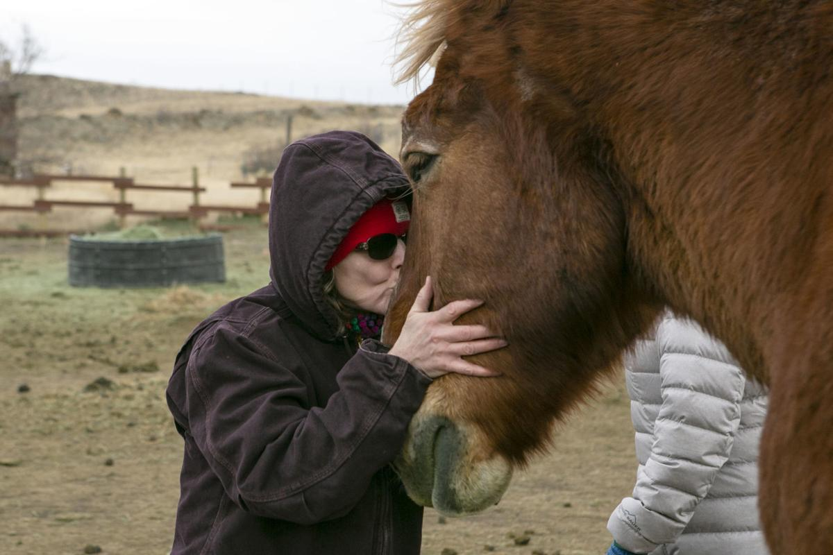 Draft Horse Sanctuary
