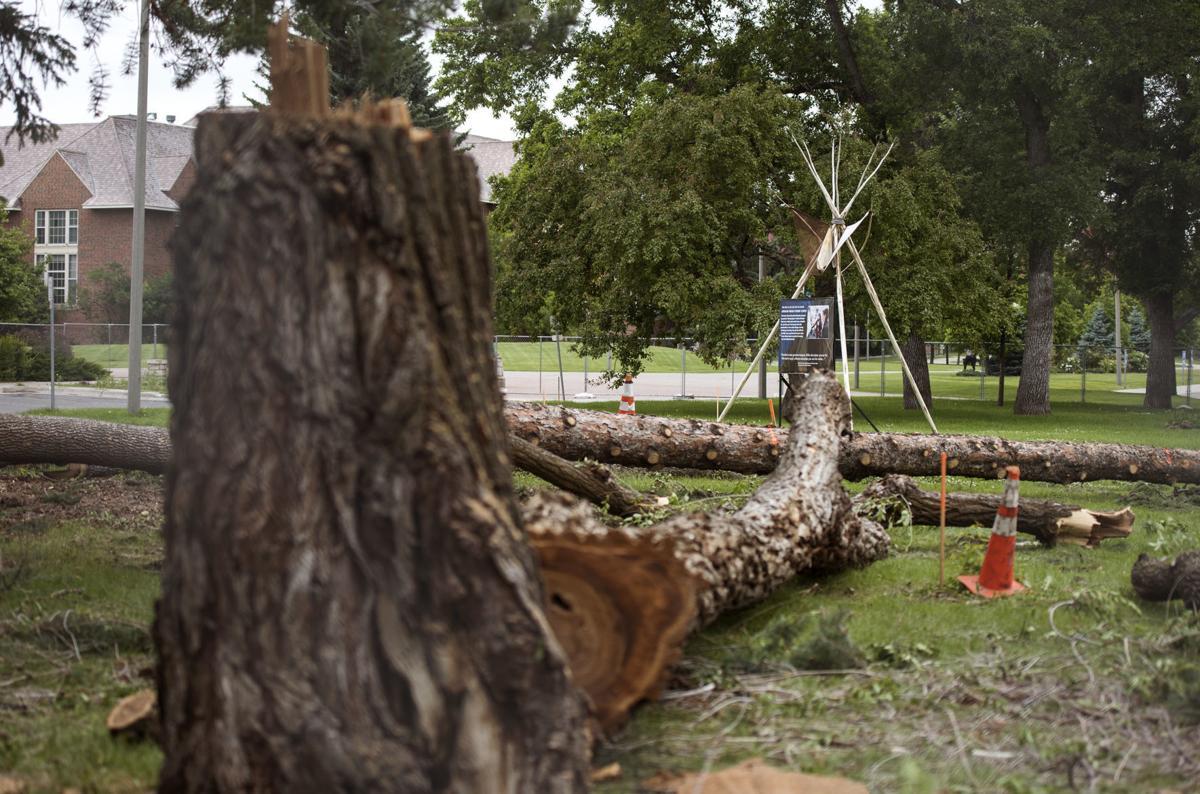 MSU Trees Cleared