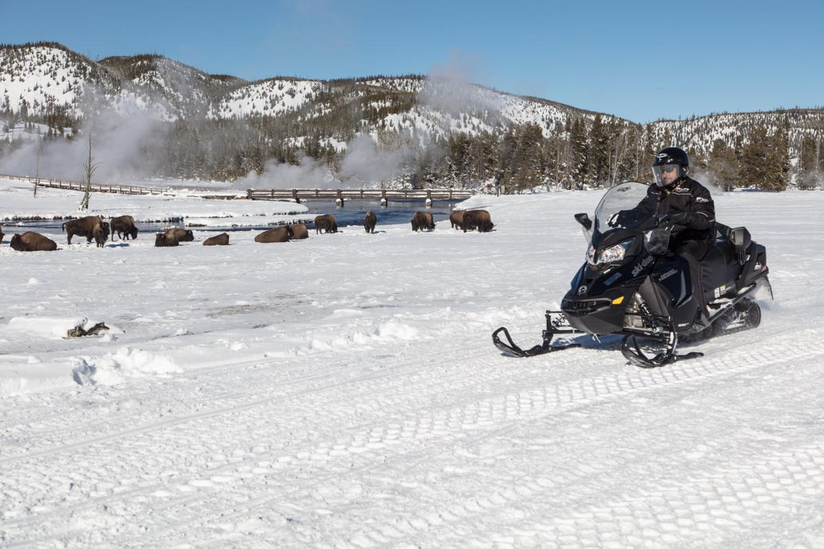 Snowmobiler drives past a herd of Bison in Biscuit Basin