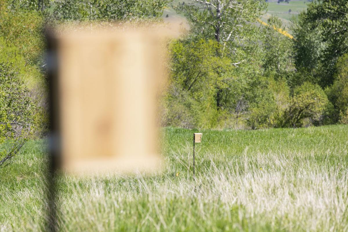Glen Lake Bird Boxes