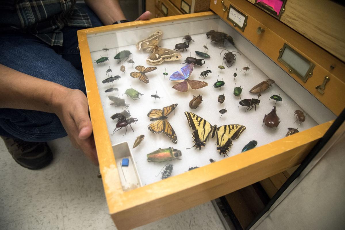 Montana Entomology Collection, MSU