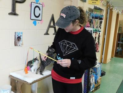 Volunteers, donations SPCA