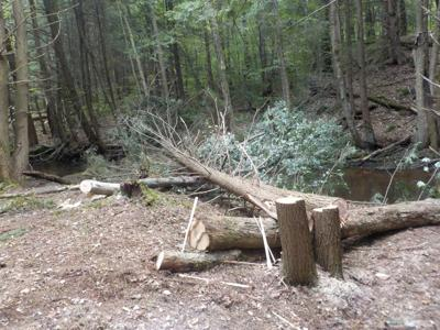 Allegheny National Forest and Western Pennsylvania Conservancy collaborate on large wood projects