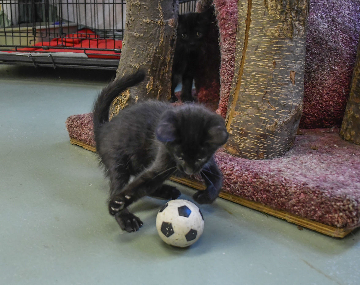 Soccer kitty