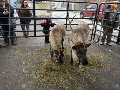 Christmas in the Wilds activities announced
