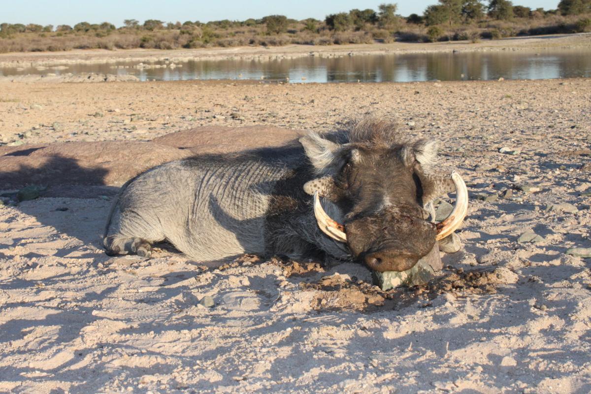 Wade Robertson warthog