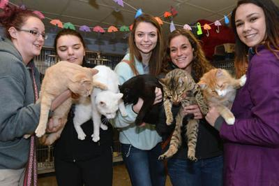 The cat's meow: McKean County SPCA gears up for kitten