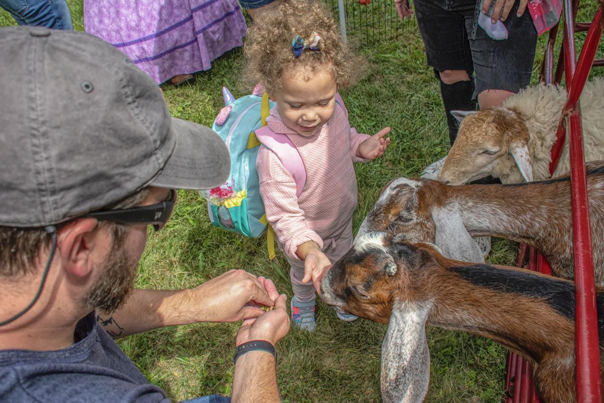 Crook Farm festival