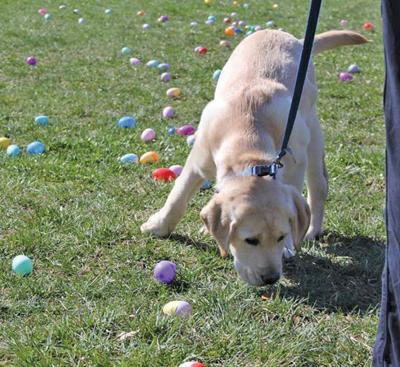 Doggie Easter Egg Hunt.jpg