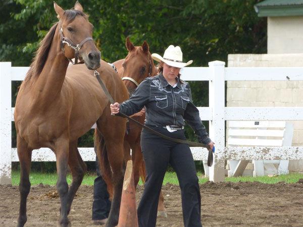 Horse Versatility Show