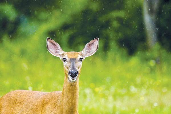 Hunting license applications down in northwest Ohio | Local