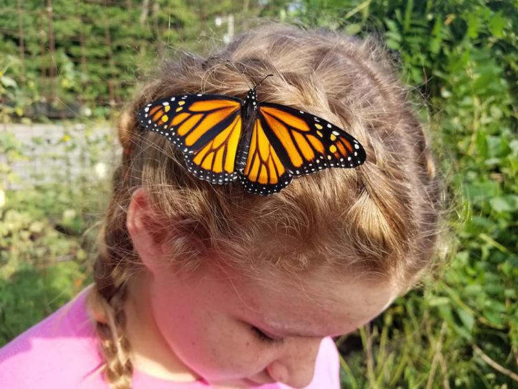 Monarch Butterflies - fun