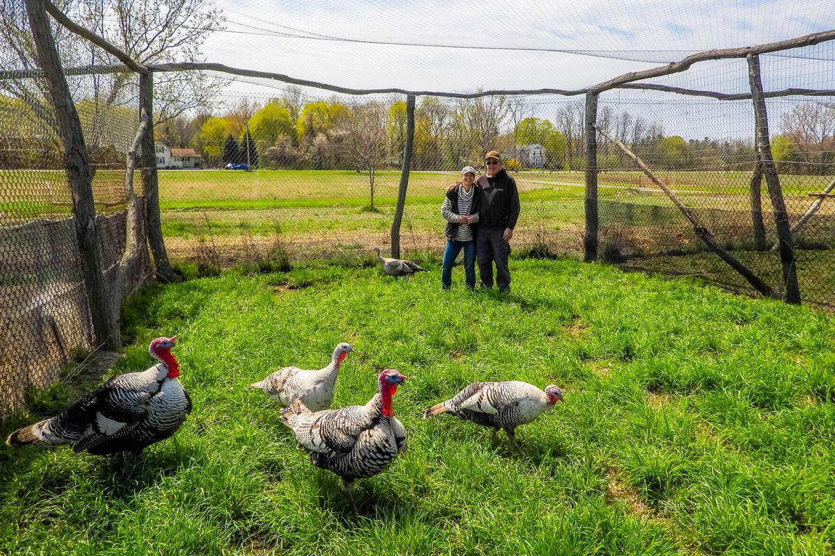 Heritage-turkeys-Brenda-and-David-Bank.jpg