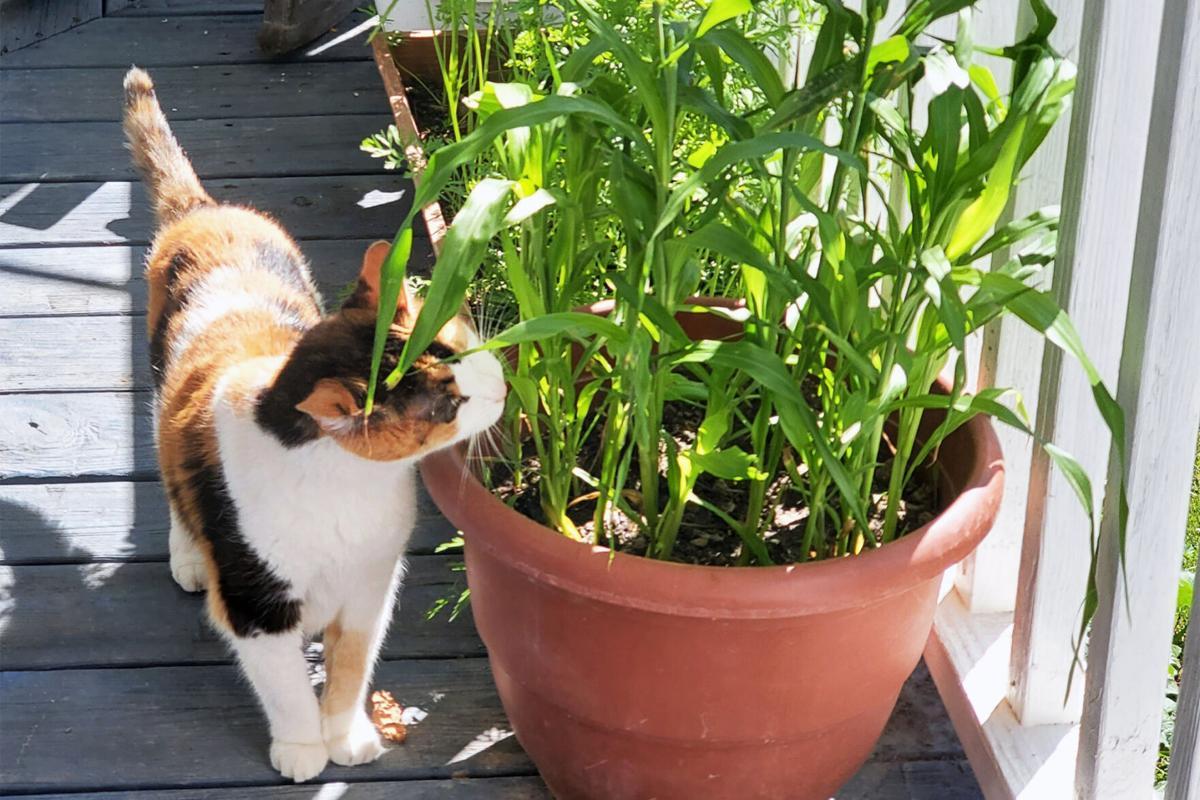 Homestead_cat.jpg